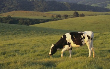 200+ Dairy Jobs Headed to Indiana