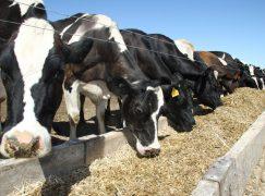 Netherlands-Based Ag Company Picks Indiana for $35M Facility, 50 Jobs