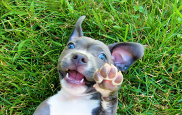 PetFirst Pet Insurance Moving Headquarters to Accommodate Rapid Growth