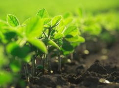 New Indiana School Focuses on Agricultural Training