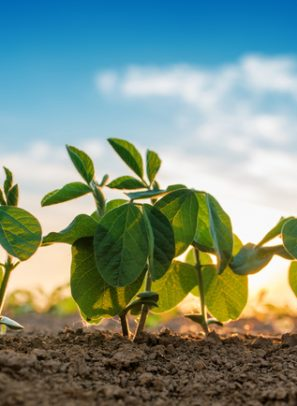 $32M Soybean Processing Plant Expansion Concludes