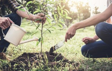 Does Your Company Want to Help Plant Trees?