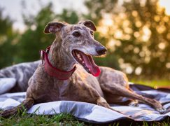$6.89B Animal Health Acquisition Completes